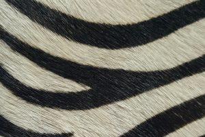 PONY PRINT BLACK AND WHITE
